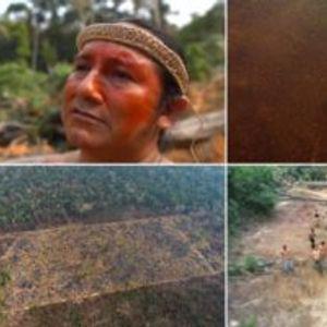 Пожарите во Амазонија го уништија домот на древно племе