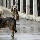 """В понеделник во Советот на град Скопје ќе се презентира програмата за работа на ЈП """"Лајка"""""""