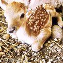 Зоолошката градина доби нов жител – се роди бебе елен