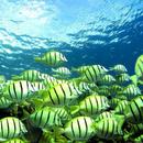 Хор во море: Првпат снимени риби како пеат како птици