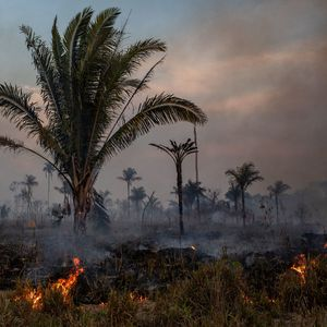 Што се случува со пожарите во Амазонија?