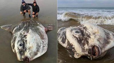 Туристи пронајдоа бизарна риба која личи на вонземјанин