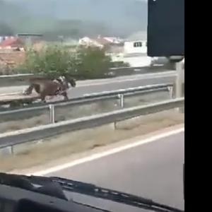"""По """"брзата лента"""" на автопатот Тетово – Гостивар брза коњ, а по него полиција!"""