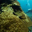 Unesko hoće da uvrsti australijski koralni greben na spisak ugroženih lokacija