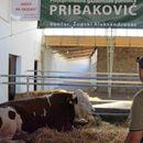 Bik Miško glavna atrakcija Poljoprivrednog sajma u Novom Sadu