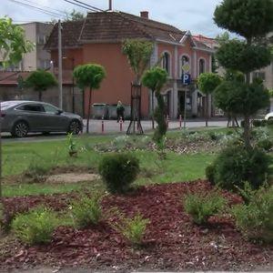 Žalosni dud i lovor višnje krasiće ulicu Save Kovačevića
