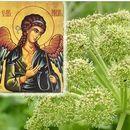 Чудотворната тревка на Св. Архангел Михаил