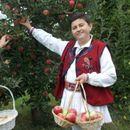 Помал род, но многу квалитетни јаболка – денеска почнува Преспанскиот јаболкобер