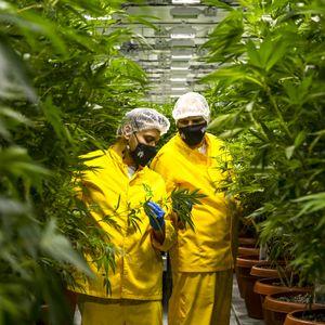 Македонија се надева дека легализацијата на марихуаната ќе ги развие економијата и туризмот