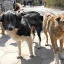 Куче скитник нападна 3-годишно дете во Скопје