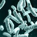 Во Монголија потврдени два случаи на чума