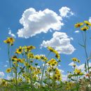 Сончево со мала до умерена облачност и северен ветер