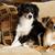 Скопско семејство живее со 12 кучиња – ги собираат од улица