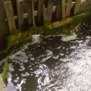 Некој со вештачки брани сака да го поплави Градскиот парк