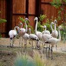 Мал рај во Зоолошката градина - убавина која мора да се види во живо