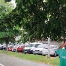 Се кастрат гранки на булевар Илинден