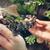 Нов жител во скопската Зоолошка градина – најмалиот крокодил на светот (ФОТО)