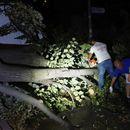 Се отстрануваат паднатите дрвја од вчерашното невреме
