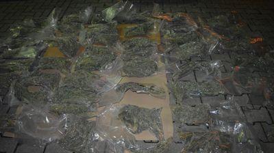Сокриле дрога во грмушка на патот за Струга – полицијата ги фатила