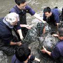 Пцовиса последниот женски примерок од редок вид желка, останаа уште три во светот