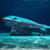 """Бахреин отвора најголем подводен парк на светот и потопи """"боинг 747"""" во морето"""