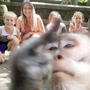 Monkey photobombs vacationing family, makes rude gesture