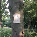 People are stapling bread to trees and sharing the photos on Reddit