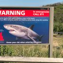 Spike in shark sightings off Cape Cod alarms swimmers, keeps them close to shore