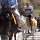 Greek donkeys are still being abused as 'tourist taxis,' PETA claims