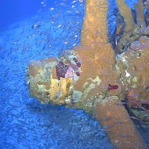 US WWII bombers, missing for 76 years, discovered in Pacific lagoon