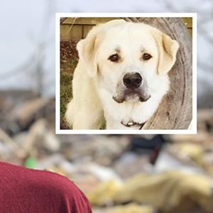 Tennessee 'hero' dog dies after saving family from deadly tornado