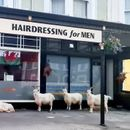 Goats spotted outside barbershop during coronavirus lockdown: 'A really fitting moment'