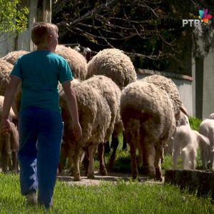 Podsticaji izbegličkim porodicama za bavljenje ovčarstvom