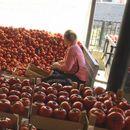 ДЕНЕШЕН: РЕВОЛТ НА ЗЕМЈОДЕЛЦИТЕ ВО СТРУМИЧКО: Цената на доматите за еден ден од 25 падна на 10 денари