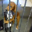 Fotka dva zagrljena psa se proširila i spasila im život malo prije eutanazije