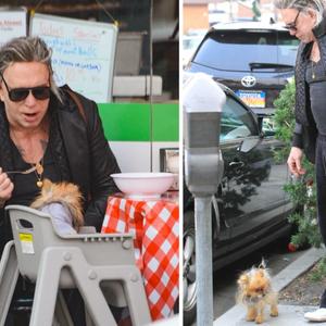 """""""Некогаш жестокиот маж сега носи чанти и го храни кучето со лажичка"""""""