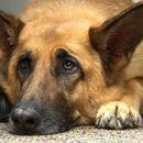 Нивното куче не спиело навечер: Секоја ноќ стоело пред нивната соба и ги гледало, а кога ја дознале причината тие се скршиле од болка