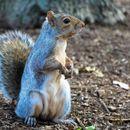 Американец дрогирал верверица за да биде агресивна
