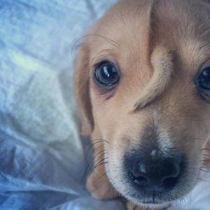 Симпатичното кученце со опаш на главата ги воодушевило спасувачите на животни во САД