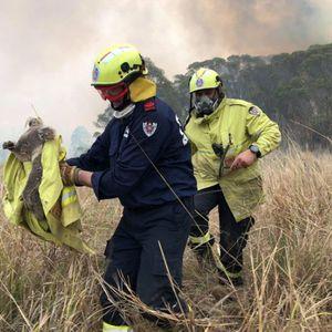 Над 2 илјади коали настрадале во катастрофалните пожари: Ова е Армагедон...