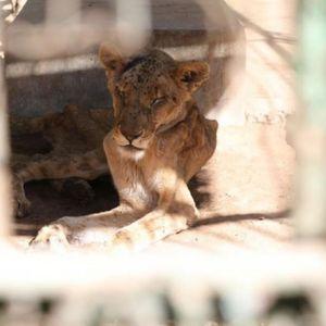 Зоолошка градина од кошмарите: Умираат животни, вработените не знаат што да прават