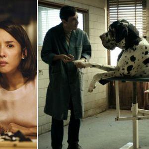 Филмови кои не треба да ги пропуштите: Не доаѓаат од Холивуд, но се вредни за вашето внимание