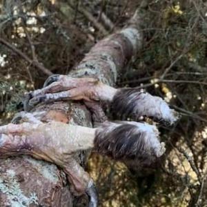 25 фотографии од природата кои станаа хит на интернет - не е тешко да забележите зошто