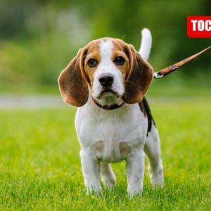 Точка ТВ: Кои кучиња живеат најдолго?