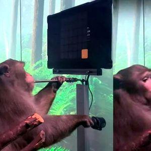 Иднината пристигна: Мајмунот Пејџер преку имплантите на Маск сам изиграл видео игра