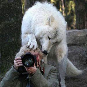 На што се се подготвени фотографите за да дојдат до совршена фотографија