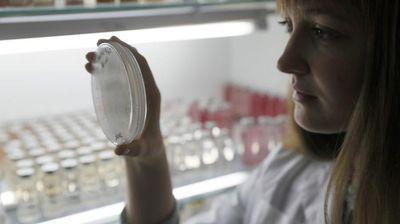 Русите успеја да најдат лек за супер-бактериите