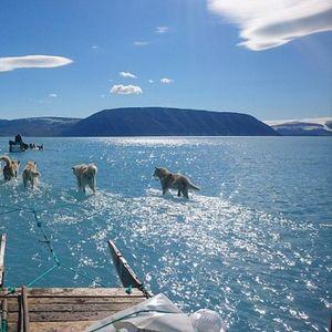 Вознемирувачка глетка: Кучиња влечат санка низ стопениот мраз на Гренланд