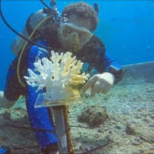 Вештачките корали спасуваат животи на морските животни