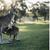 Древниот кенгур наликувал на коала